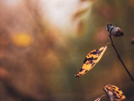 Herbstimpressionen mit dem Nikkor 135mm f2.8