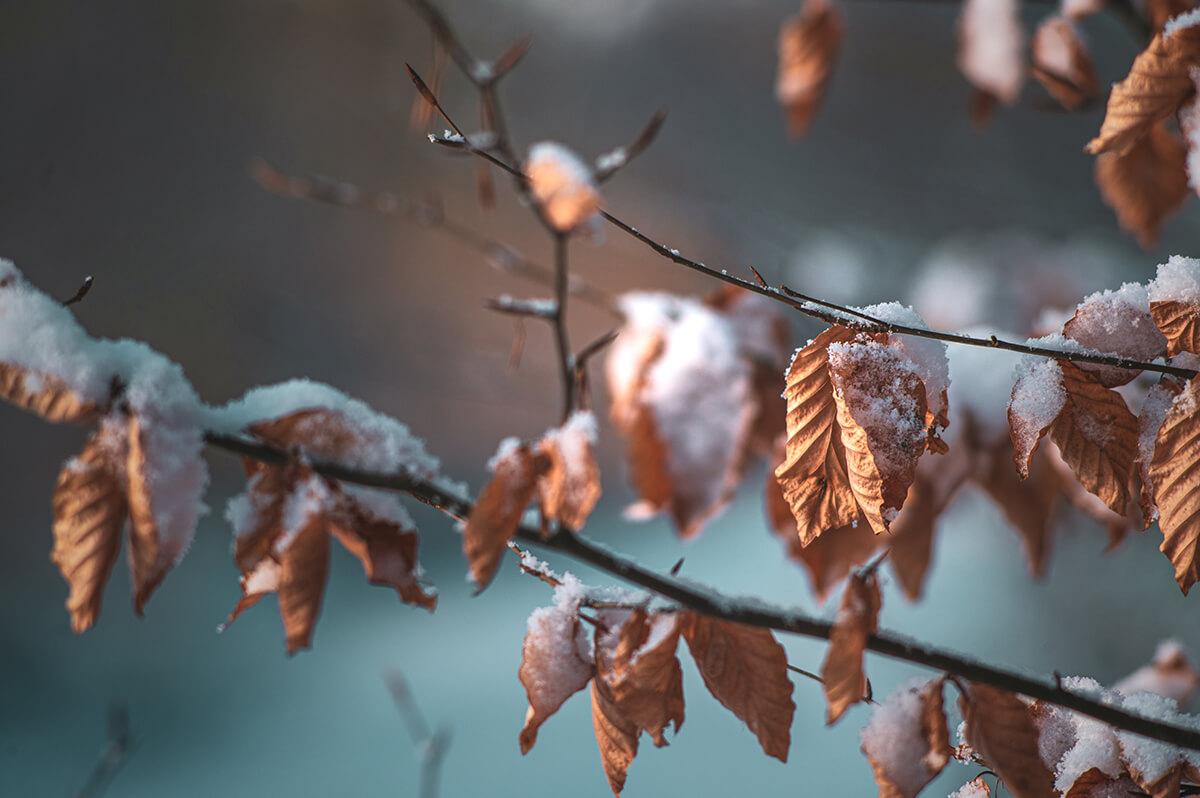Endlich mal wieder richtig Winter