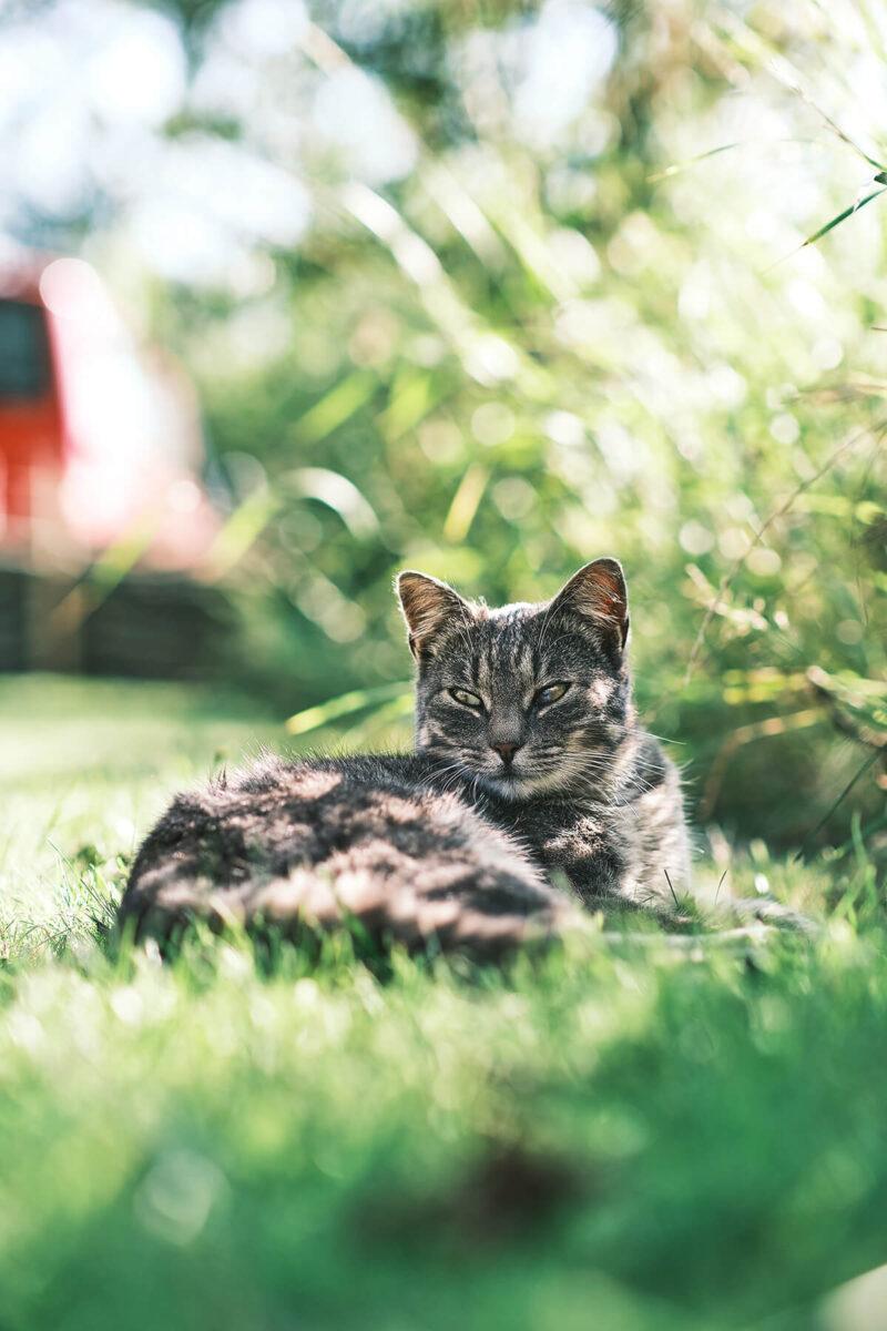 Katze bei Blende 1.8